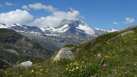 mountain meadow in front of the