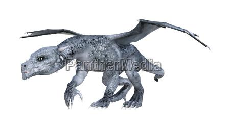 3d rendering fantasy dragon whelp on