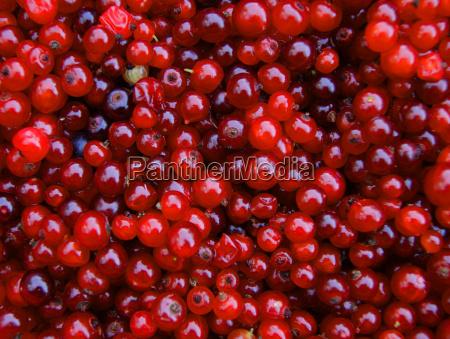 berry wood sorrel background