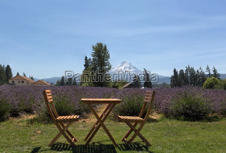 scenic lavender field on a sunny