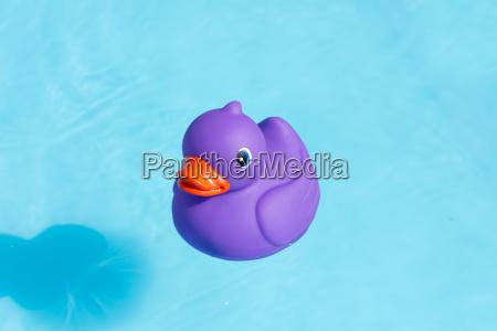 a single purple rubber duck alone