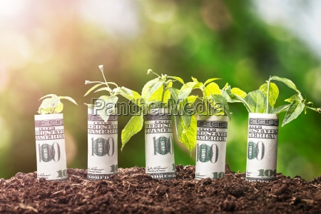saplings covered with american banknotes