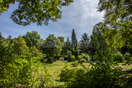 parkland with trees cypresses and shrubs