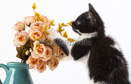 kitten with flowers