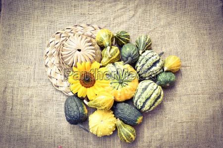 pumpkin in different types