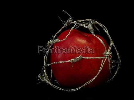 apple in barbed wire art