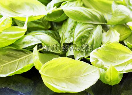basil leaves over black table