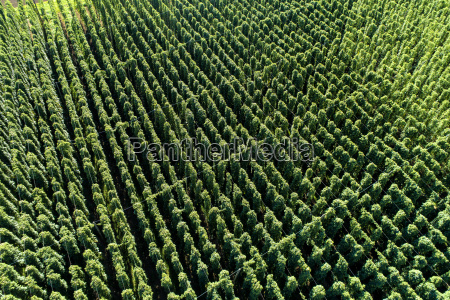 hops field aerial view