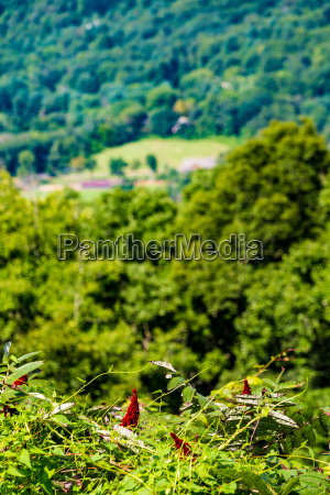 red flowers over blue ridge valley