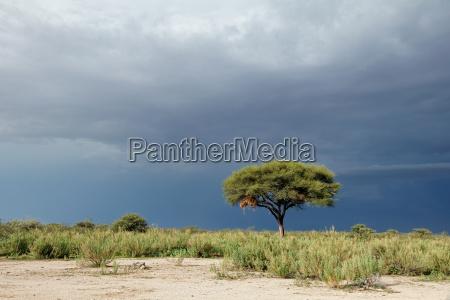 tree against a dark sky