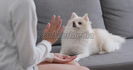 woman training pomeranian dog at home