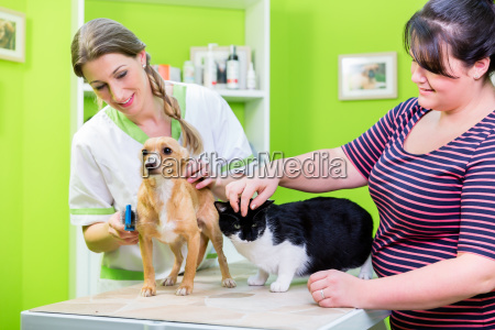 cat and dog together at vet