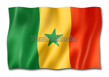 senegalese flag isolated on white