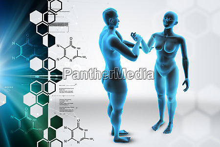 3d female and male body