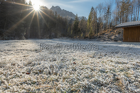 sun rays over frozen grass and