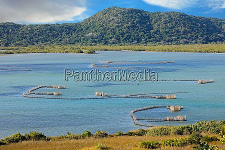 traditional fish traps kosi bay