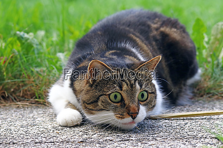 a small cat shortly before the