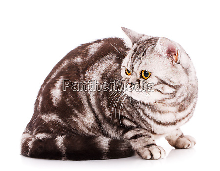 cool cat on a white background