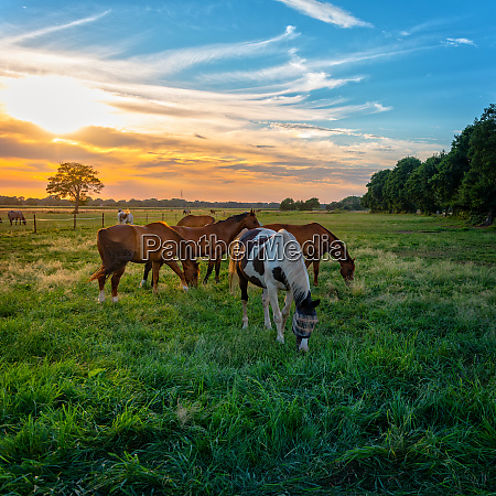 grazing horses in autumn on a