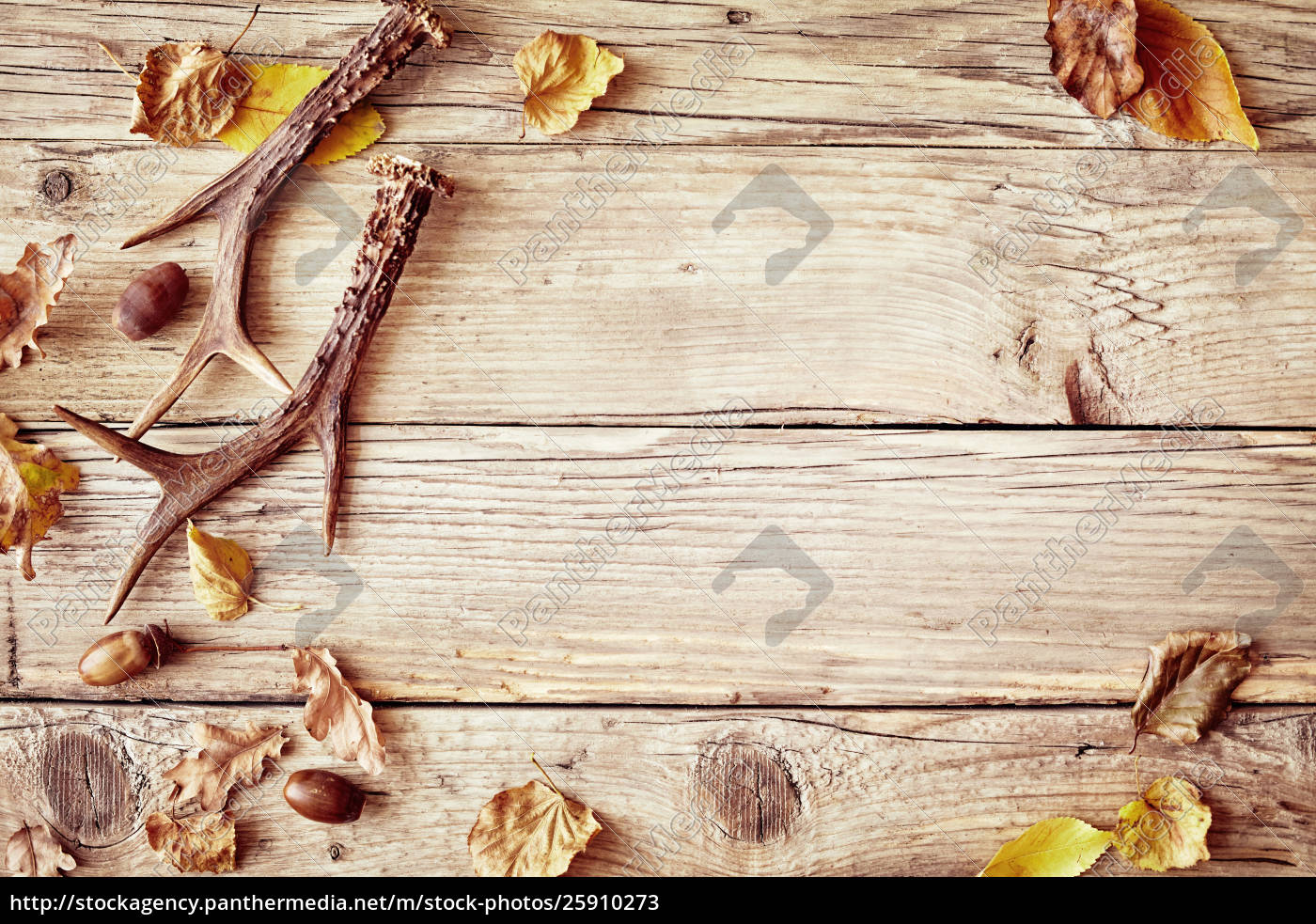 Old Rustic Wood Background With Antlers Stock Photo 25910273 Panthermedia Stock Agency Find the best free stock images about rustic wood background. stock photo 25910273 old rustic wood background with