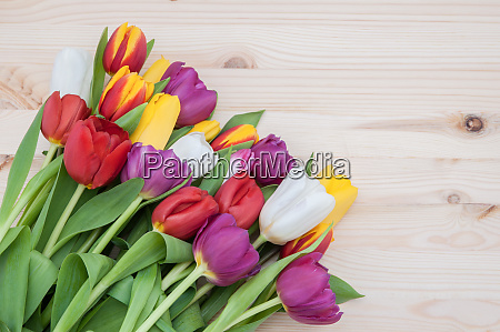 many multicolored tulips form a frame