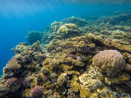 beautiful coral reef and tropical fish