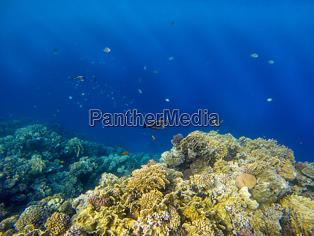 underwater image of coral reef and