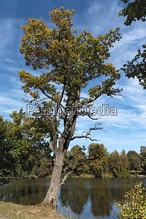 the meerpfuhl pond at merzhausen a