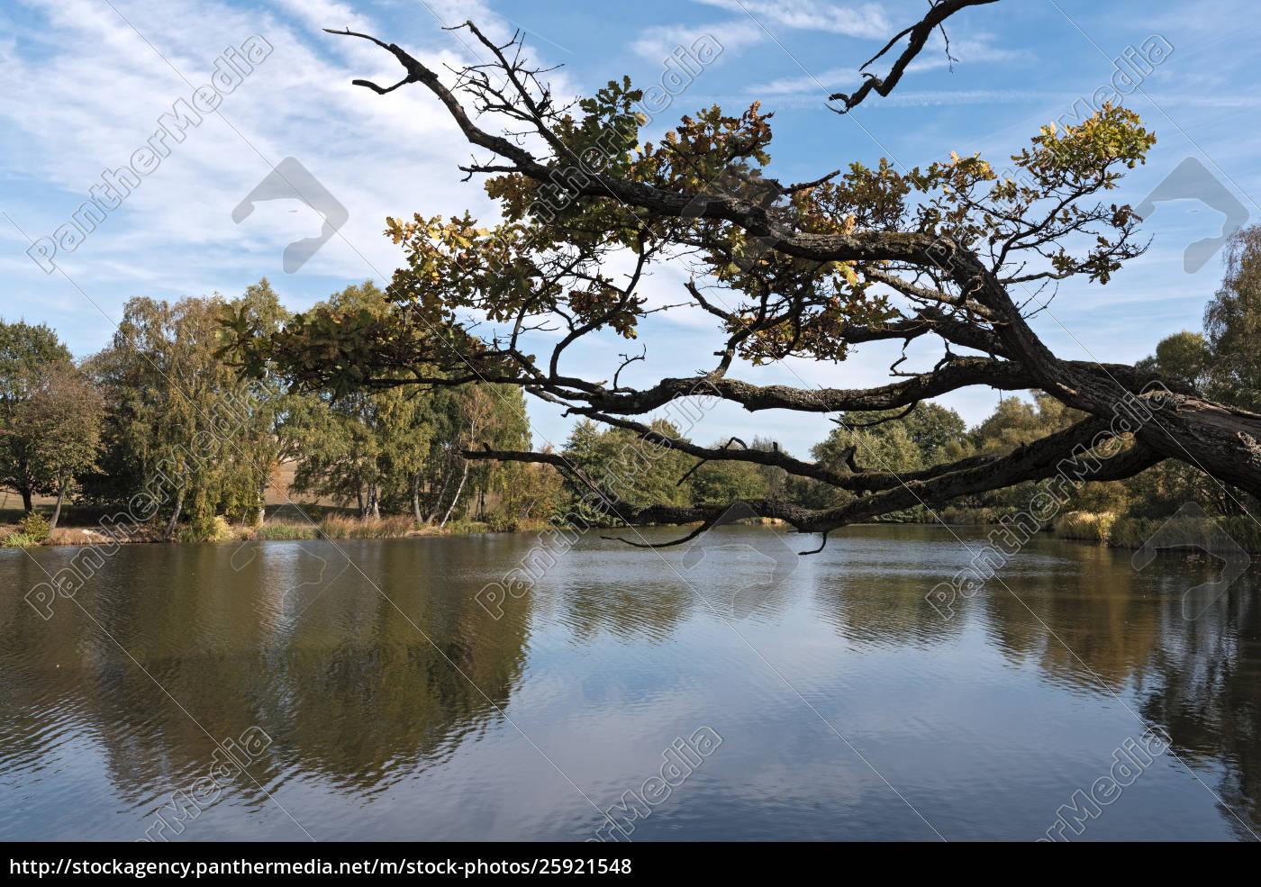 the, meerpfuhl, pond, at, merzhausen, , a - 25921548