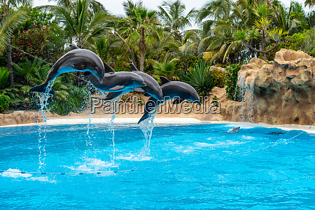 a group of atlantic bottlenose dolphins