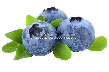 blueberry blueberries berry berries fruit fruits