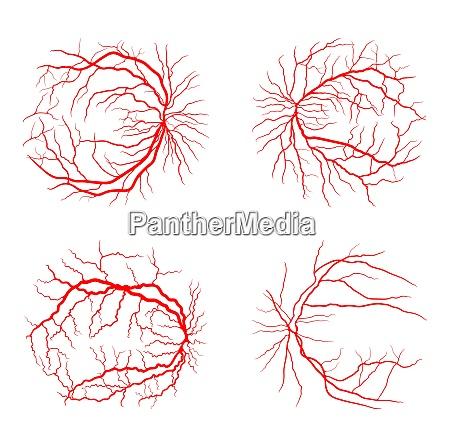 eye vein set system x ray