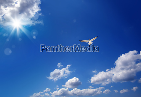 cloudscape image with flying seagull over