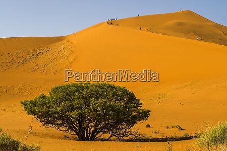namibia namib naukluft park big