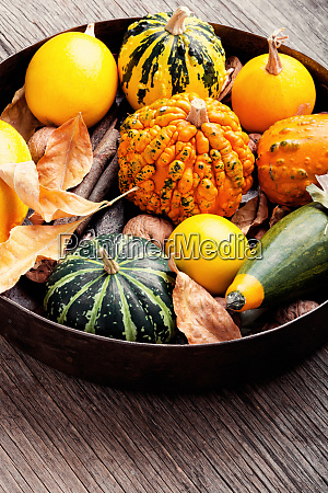 autumn pumpkin in tray