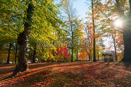 autumn in park in fall season