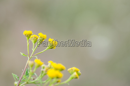 yellow flowers in autumn