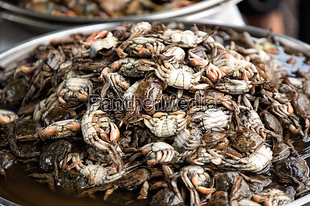 close up shot of cooked crabs