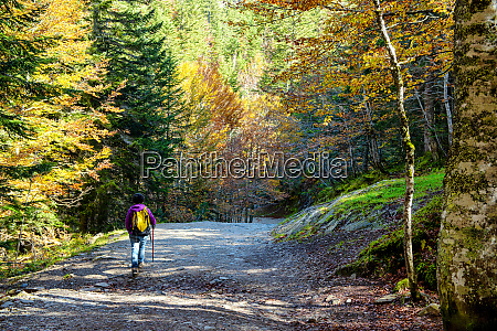 woman hiker walking in the forest