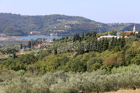 view over an olive grove on