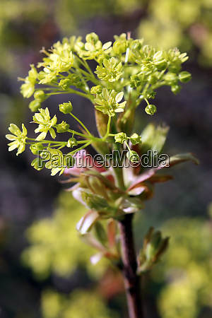 young leaves and flower stand at