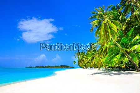 dream beach with palm trees on