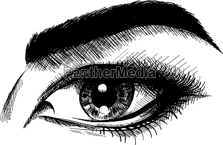 vector illustration beautiful women eyes with