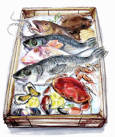 variation, of, fish, and, seafood, on - 25992244