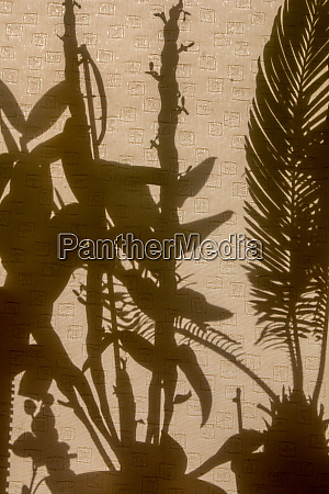 shadows of plants on curtains