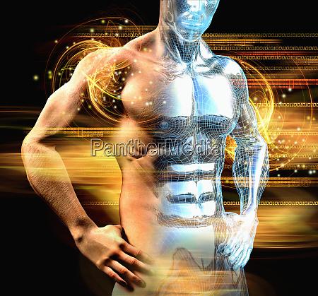 mans muscular torso
