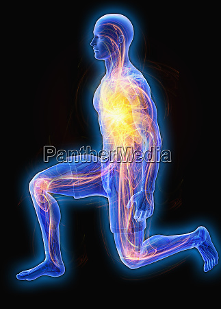 circulation visible through transparent kneeling man
