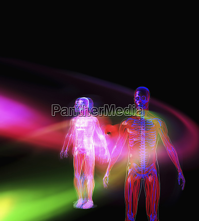 transparent bodies