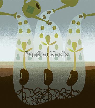 watering cans watering seedlings
