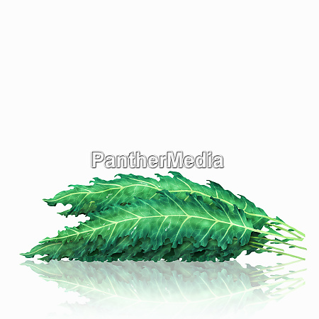 pile of kale leaves
